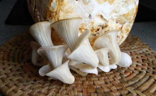 Oyster mushrooms on a wicker plate ready to be cooked