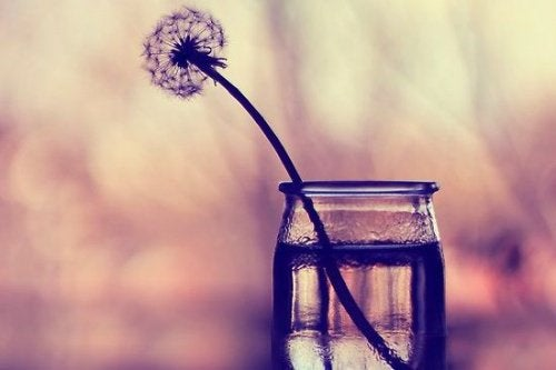 A dandelion in a glass.