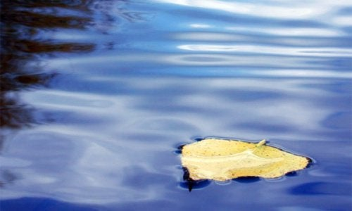 A leaf on some still water.