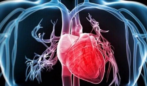 Heart inside body showing blood vessels artistic sugar-apples