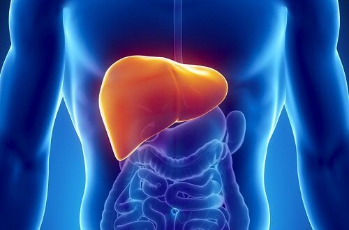 The position of the liver.