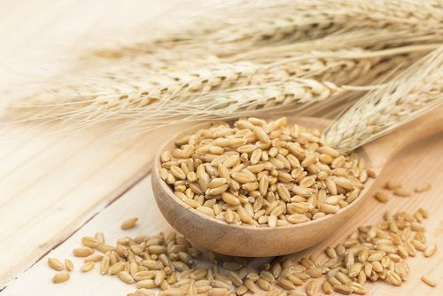 Barley raw and wheat plant best carbohydrates