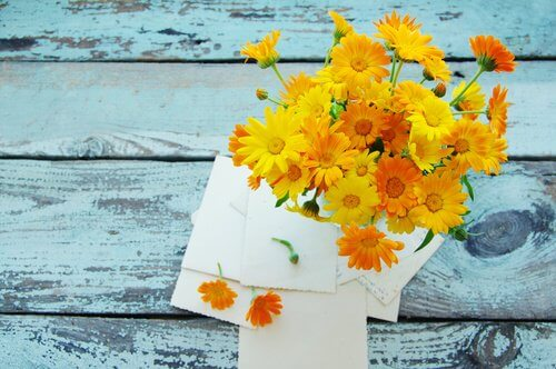 Marigold and What it Can Do for Your Health