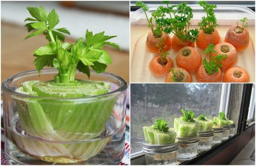 5 Easy Vegetables to Regrow