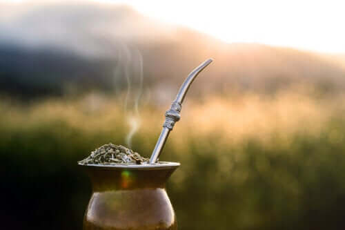 Did You Know that Yerba Mate Helps You Lose Weight?