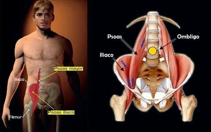 Psoas major anatomy
