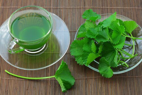 Celery seed tea to heal inflamed legs