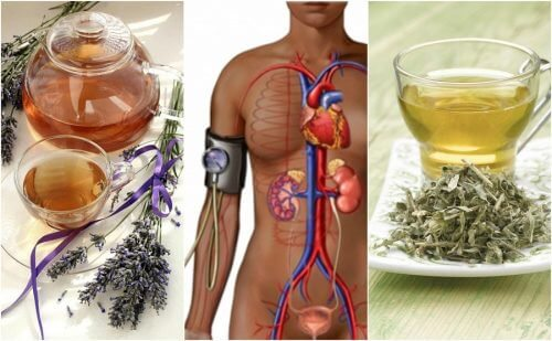 5 Herbal Remedies to Lower Blood Pressure