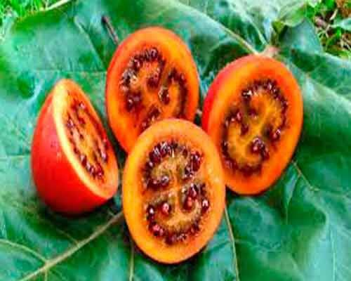 4 Strange Exotic Fruits and Vegetables that You Probably Haven't Seen