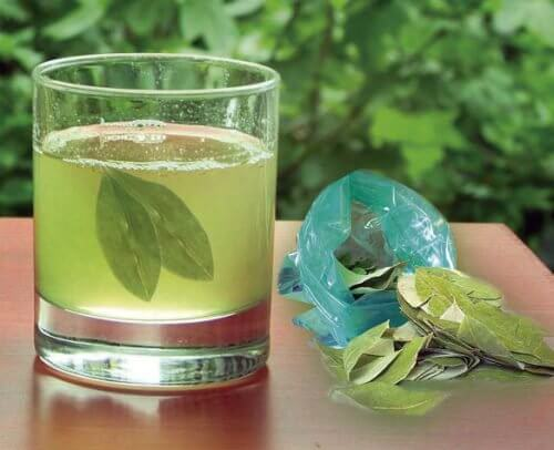 Avocado leaf tea.