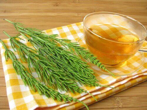 Horsetail tea to reduce high cholesterol