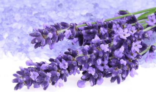 Lavender to help lower blood pressure