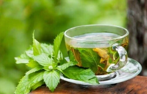 Lemon balm tea.