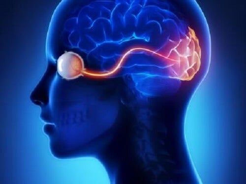 The visual cortex of the brain