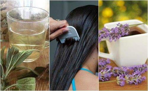5 Herbal Remedies to Treat Lice Naturally
