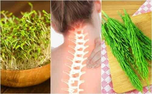 7 Medicinal Plants that May Help Improve Your Bone Health