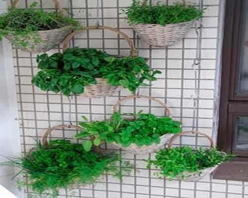 You can make a hanging garden with baskets.