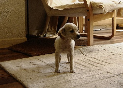 A puppy on a rug.