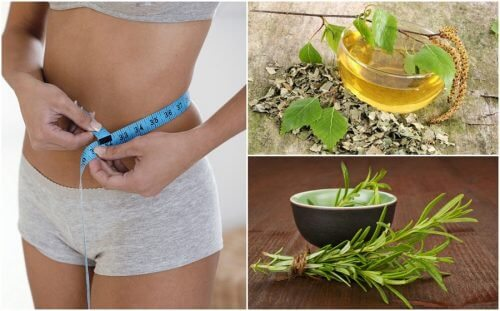 8 Healthy Herbs that Will Help Your Weight Loss Diet