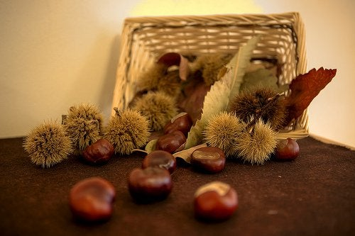 Horse-chestnuts