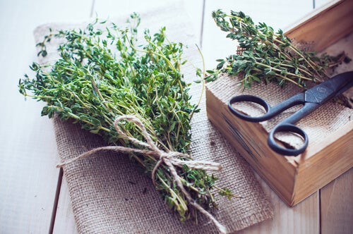 natural herbs with carrulim