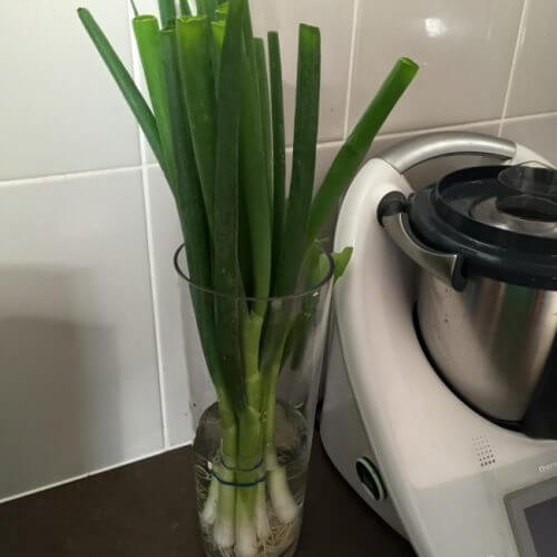 chives in water