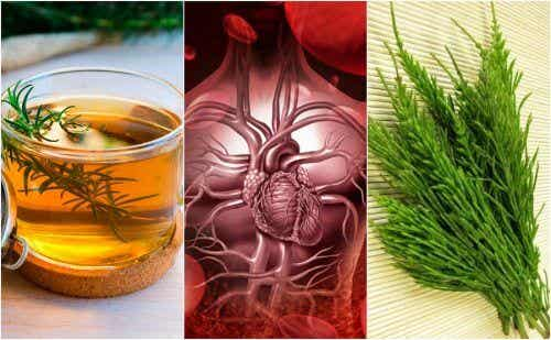 How to Improve Your Circulation Using These 5 Herbal Remedies