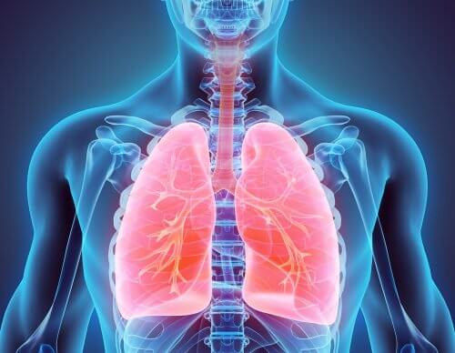 Learn How to Quit Smoking and Clean Your Lungs