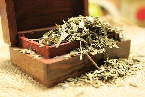 Ginkgo biloba tea to prevent muscle cramps
