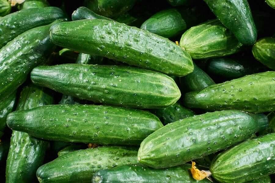 Lots of green cucumbers.