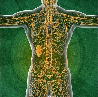 The Lymphatic System: Four Interesting Facts You'll Want to Know