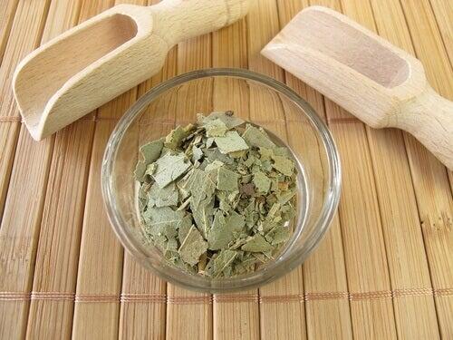 eucalyptus and mint