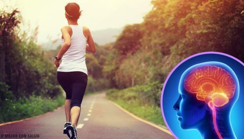 When You Stop Exercising, Your Brain Changes