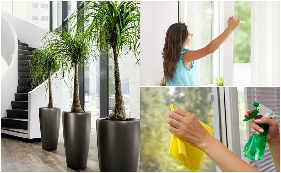 6 Things You Can Do To Improve the Air Quality in Your Home