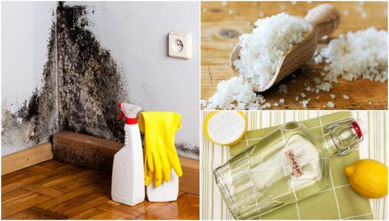 5 Effective Ways to Remove Dampness in Your Home