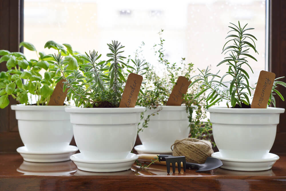 Create Your Own Aromatic Garden