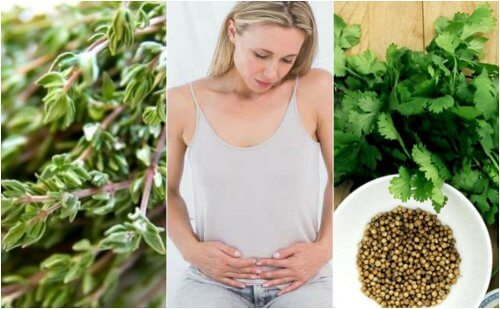 6 Carminative Herbs that Help You Get Rid of Gas