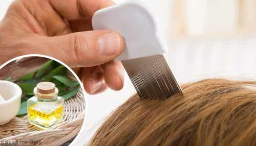 6 Home Remedies to Eliminate Lice
