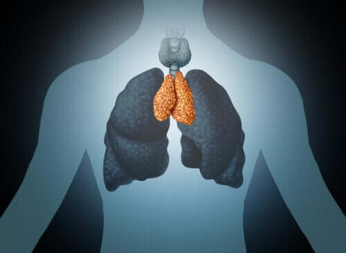 The thymus gland: moderator of the immune system