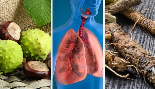 Four Home Remedies to Strengthen the Lungs