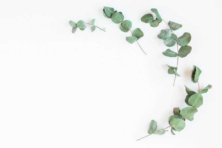 유칼립투스 폐를 튼튼하게 해 주는 4가지 자연 재료