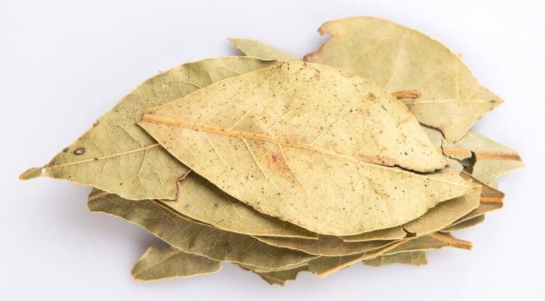 월계수 잎