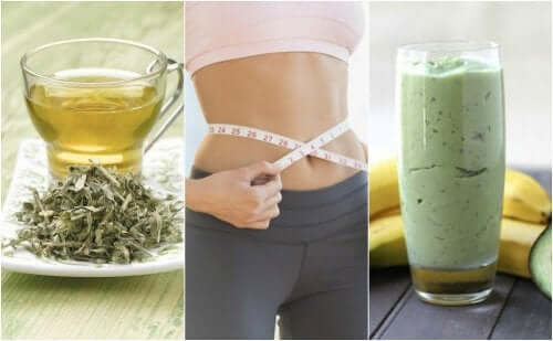 Three Weight Loss Beverages Made with Green Tea