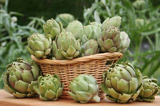 Artichokes to help with inflamed liver
