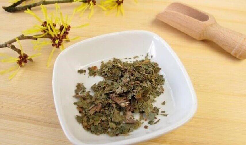 Borstpijn verminderen met thee van toverhazelaar