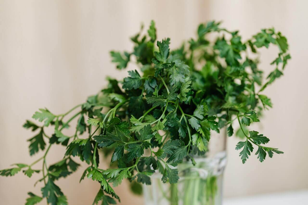 Parsley in a glass with water.
