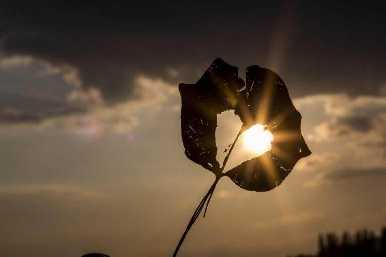 a heart shape in a leaf, with the sun peeking through