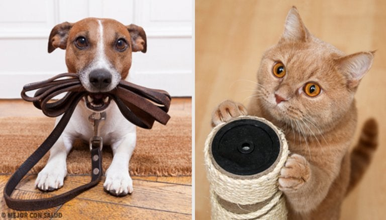 Find Out What Pet is Most Beneficial for You