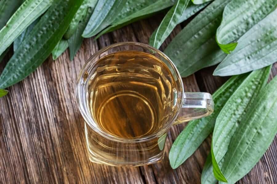 Plantago tea surrounded by plantago leaves.