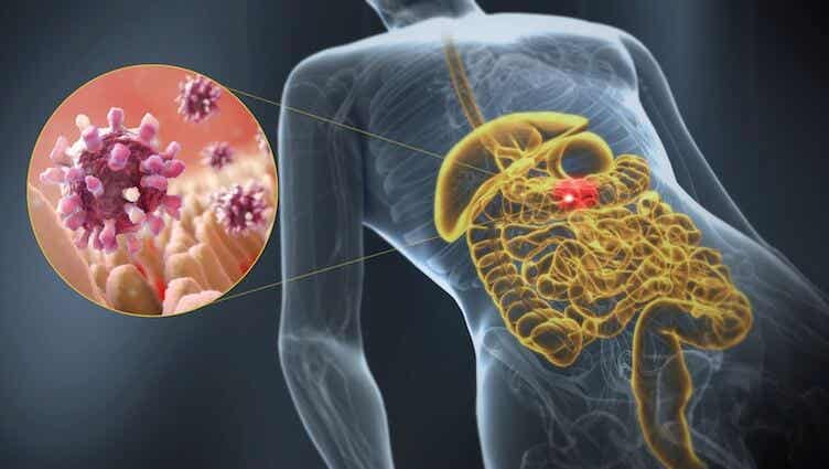 Learn Some Information about Gastroenteritis